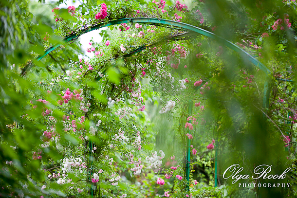Photo of an arch with climbing roses in the gardens of Monet in Giverny.