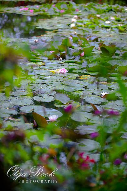 Een foto van de watertuin van Monet in Giverny. De foto past impressionistische effecten toe: het lijkt erop dat er vrije penseelstreken van licht en kleuren zijn.