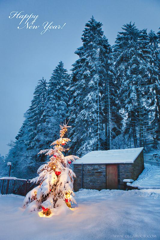 Kerstcaard met een nachtfoto van kerstbomen. Een boom is versierd me lampjes en kerstballen, en daarachter ligt een bos met hoge besneeuwde dennenbomen.