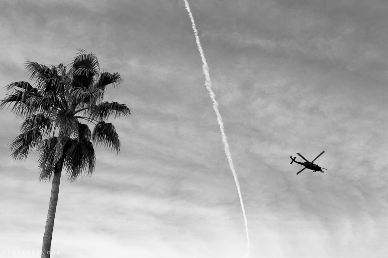 Black and white photograph of a palm tree and a helicopter in the sky.