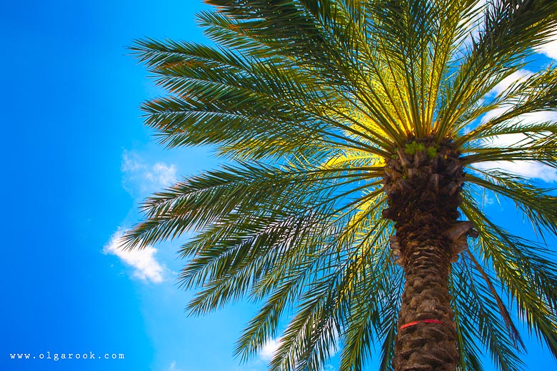 Colorful photograph of a palm tree against the bright blue sky: a kind of postcard. It gives you a feeling of relaxed and careless tropical vacation.
