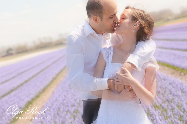 Romantic wedding photo: bride and groom kissing among the flowers in a hyacinth field.