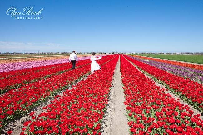 Trash the dress fotoshoot in de bollenstreek: een bruidspaar loopt in het veld tussen de felle bloemen.