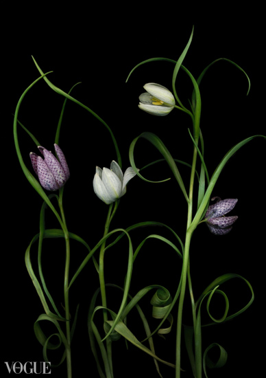 fritillaries-memories-of-paradise-Best-of-Vogue-OlgaRook