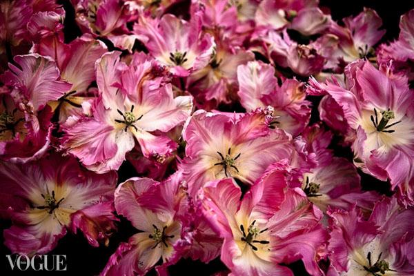 tulips2-Vogue-Italia-OlgaRook