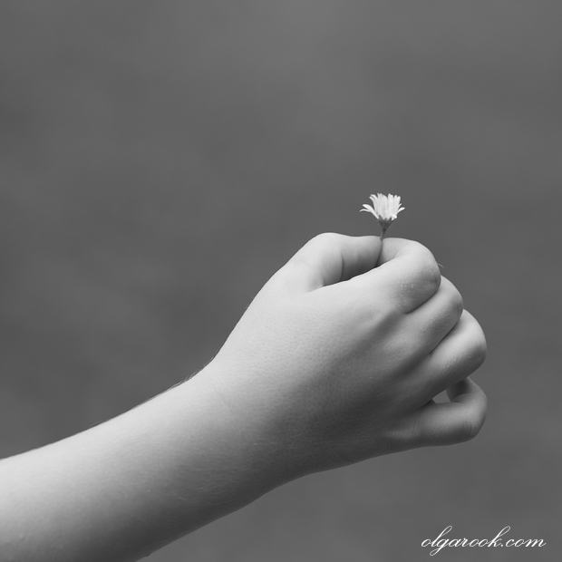 a daisy in a child's hand