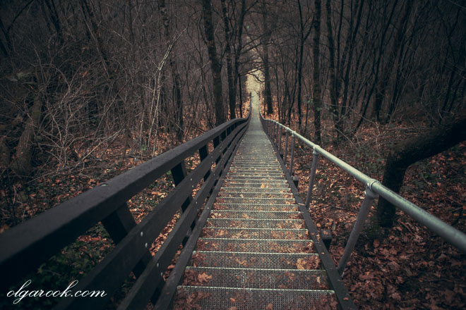 photo of a stairway going downhill in a forest