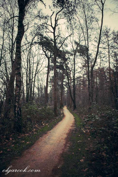 photo of a winding path in a forest