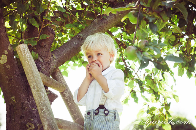 photo of a little boy biting at an apple while standing on a ladder at an apple tree