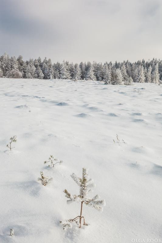 winter-tale-fotografie-10