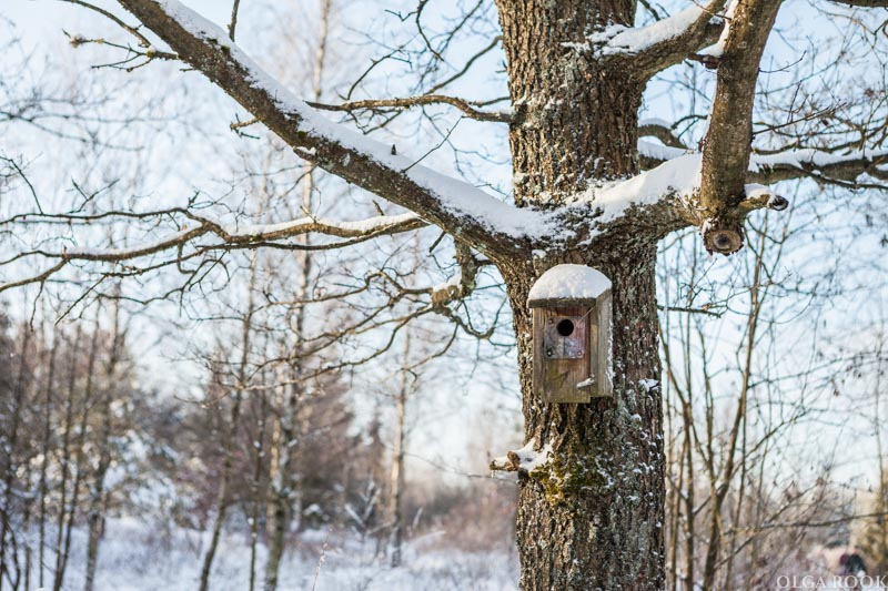 winter-tale-fotografie-11