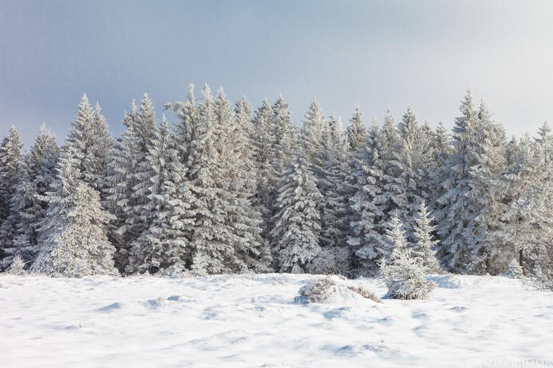winter-tale-fotografie-3
