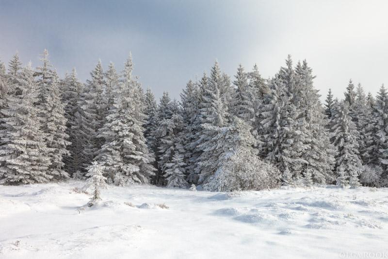 winter-tale-fotografie-4