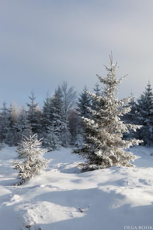 winter-tale-fotografie-8