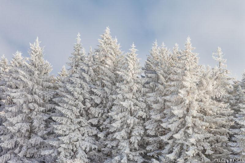 winter-tale-fotografie-9