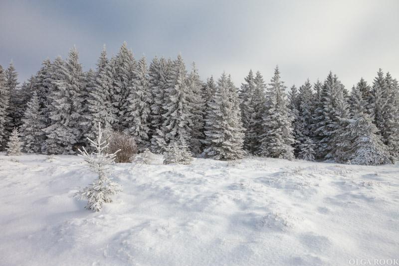 winter-tale-fotografie