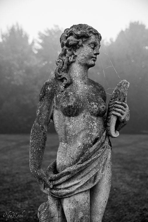 Mystical_mist_OlgaRookPhotography-10