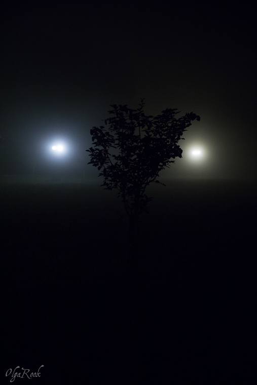 Mystical_mist_OlgaRookPhotography-3