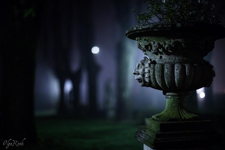 Mystical_mist_OlgaRookPhotography-4
