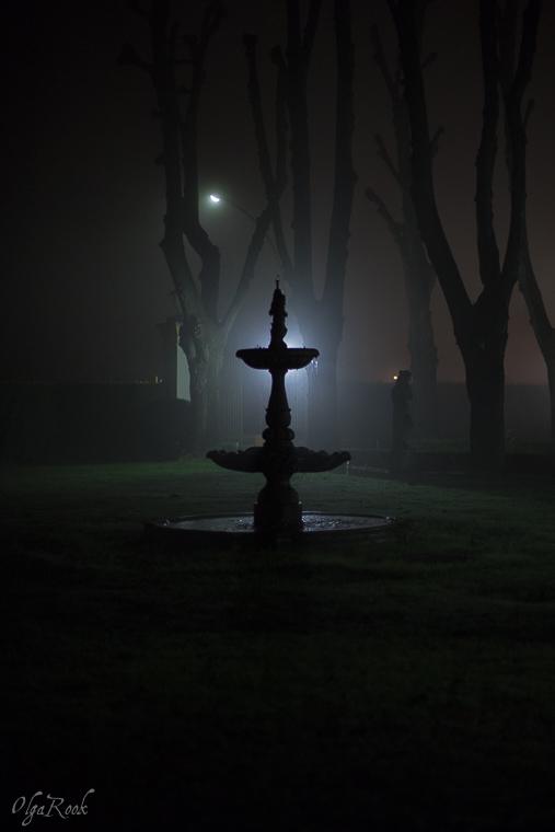 Mystical_mist_OlgaRookPhotography-6