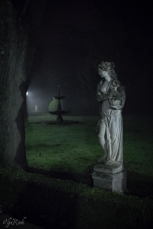 Mystical_mist_OlgaRookPhotography-7