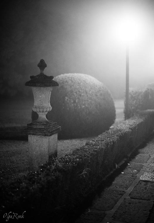 Mystical_mist_OlgaRookPhotography-8