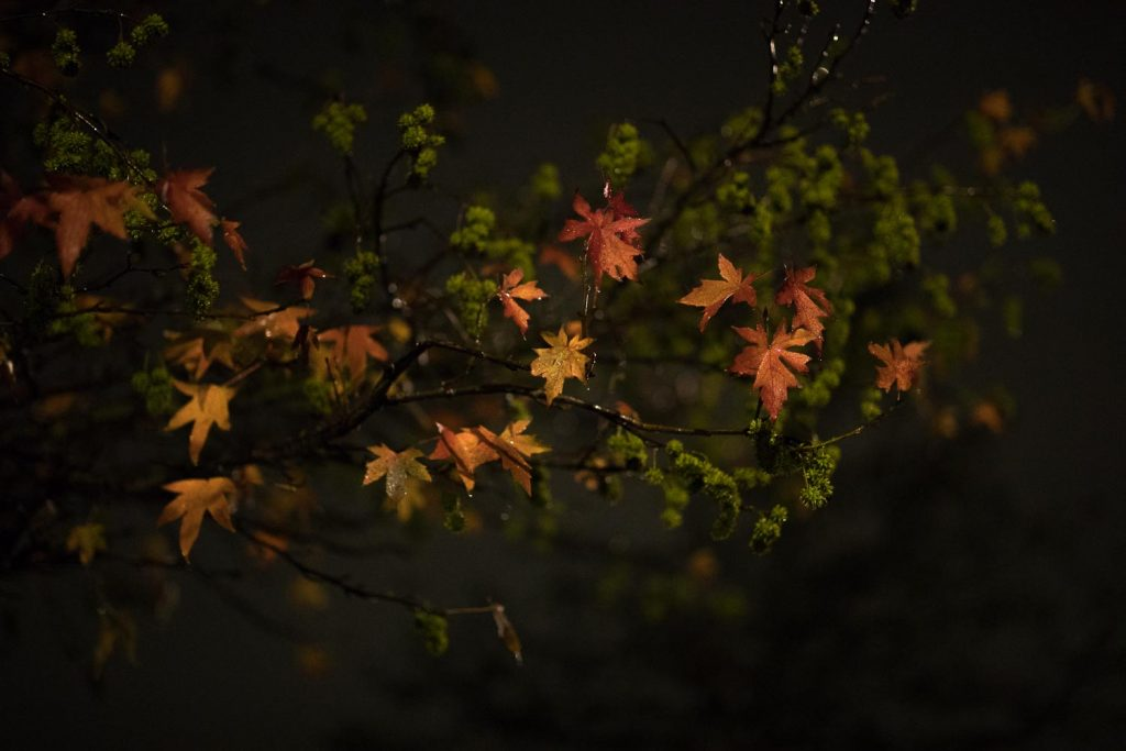 canon-85-1.4-lens-review-sample-image-night