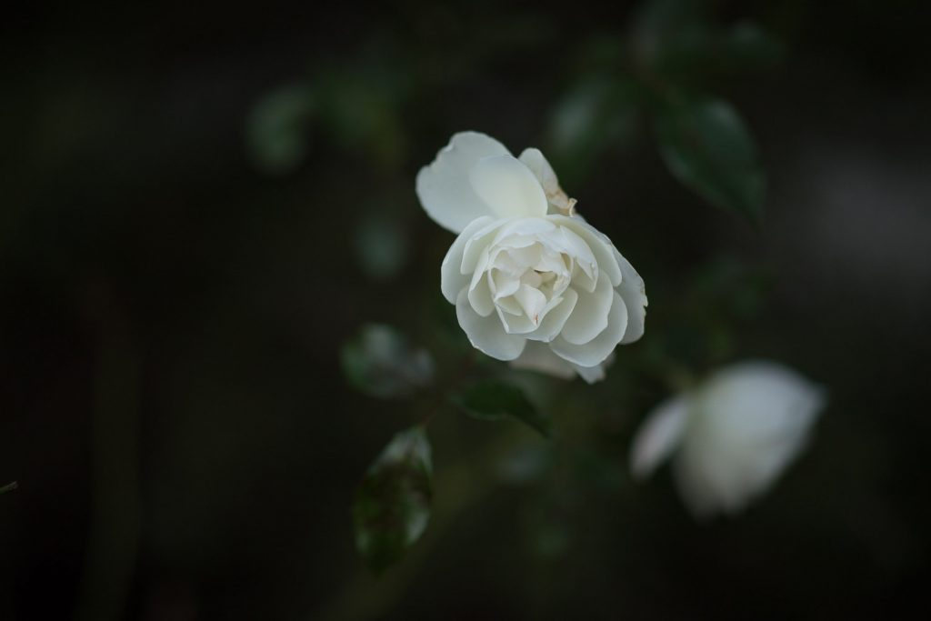 canon-85-1.4-lens-review-sample-images-12