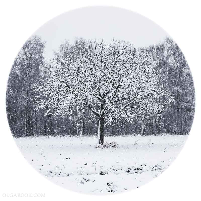 OlgaRook-winter-holland-2