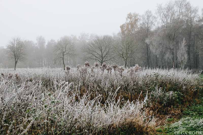 OlgaRook-winter-mist-holland-11