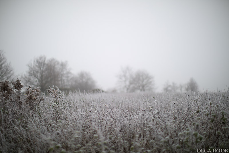 OlgaRook-winter-mist-holland-14