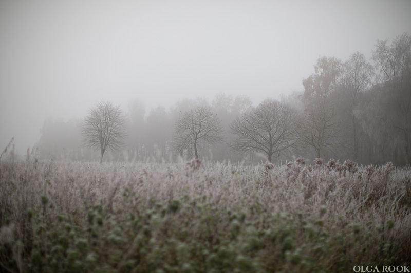 OlgaRook-winter-mist-holland-3