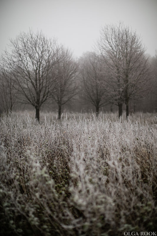 OlgaRook-winter-mist-holland-4