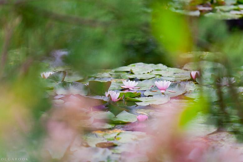 impressionistic-photography-OlgaRook-Giverny-4