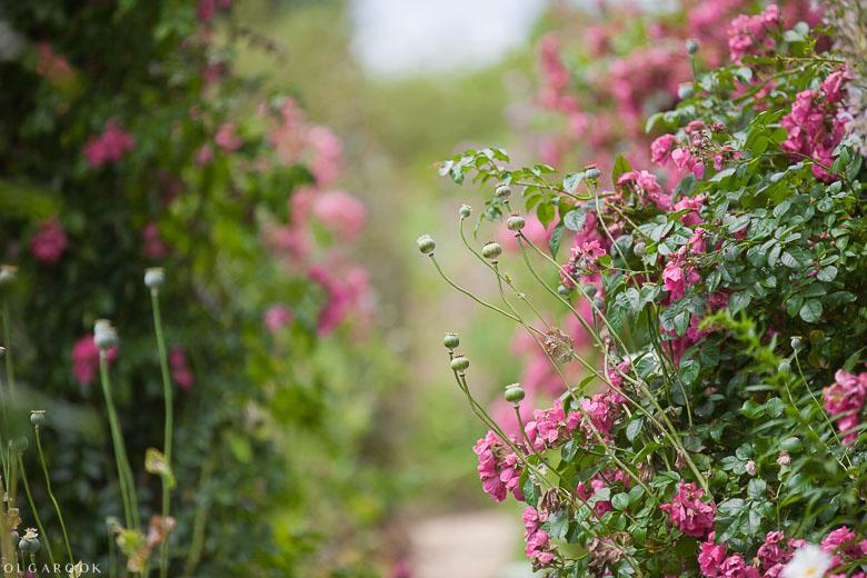 Foto van een pad tussen de bloemen in de tuin van Claude Monet.