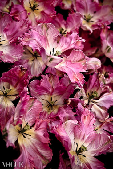 tulips-Vogue-Italia-OlgaRook