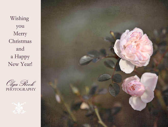 SeasonsGreatings card with pink roses with a touch of snow