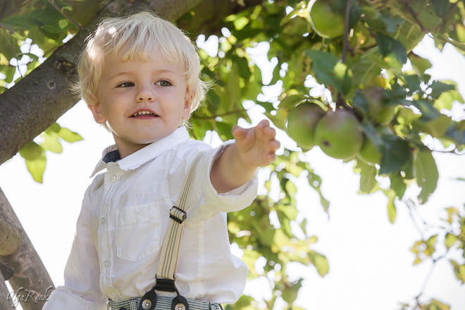 Portrait of a smiling little boy reaching for apples on a tree