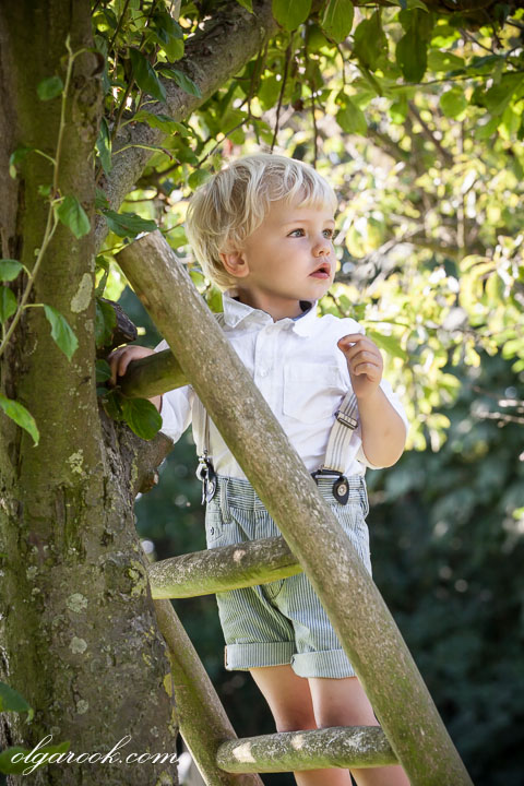 Portrait of a little boy standing on a ladder at at apple tree looking for apples to pluck