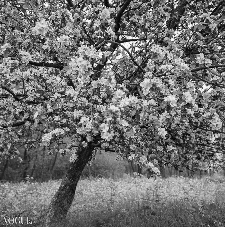 OlgaRookPhotography-Vogue_analoge-natuurfotografie-4