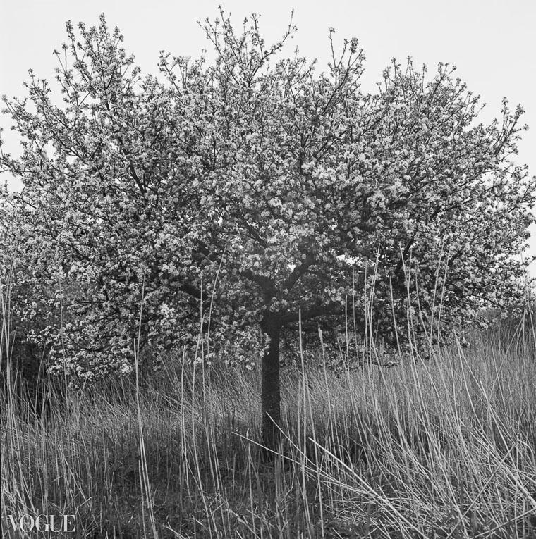 OlgaRookPhotography-Vogue_analoge-natuurfotografie-7
