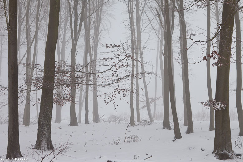 Winter forest in the mist.