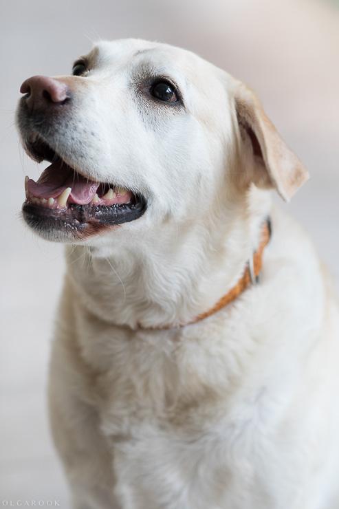 hondenportret-rotterdam-2