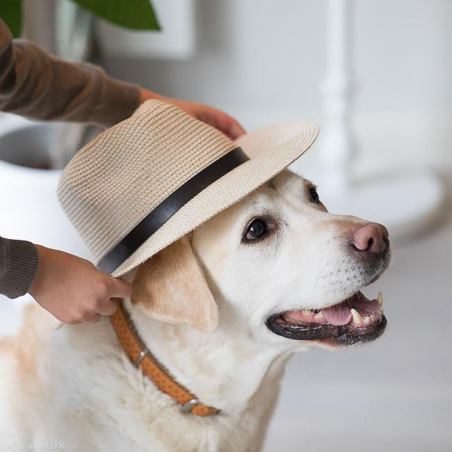 hondenportret-rotterdam-4