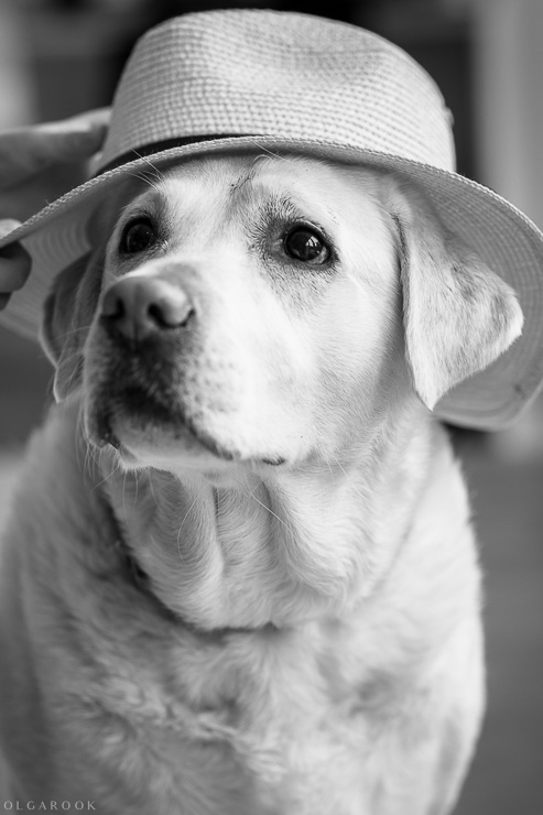 photo of a dog wearing a hat