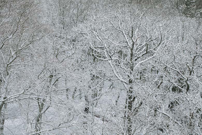 wintertale-OlgaRook
