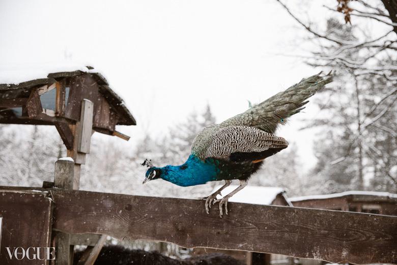 wintertale-olgarook-54