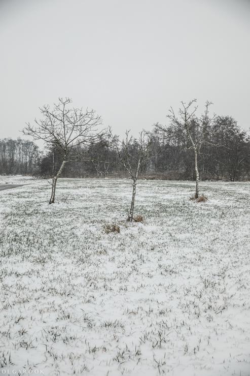 Landschapfotografie_OlgaRook-2