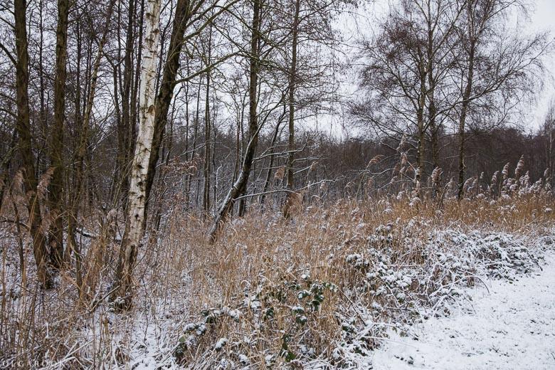 Landschapfotografie_OlgaRook-21