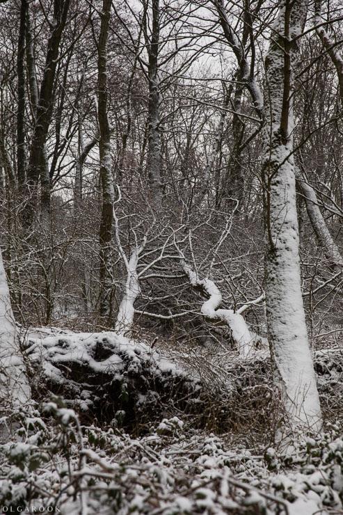 Landschapfotografie_OlgaRook-3